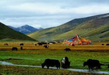 """""""Pasture Paradise: The Dream of a Tibetan Environmentalist, Part 2"""" By Woeser"""