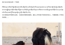 """""""Abandoned Tibetan Mastiffs"""" By theGangri Neichog Research and Conservation Centre"""
