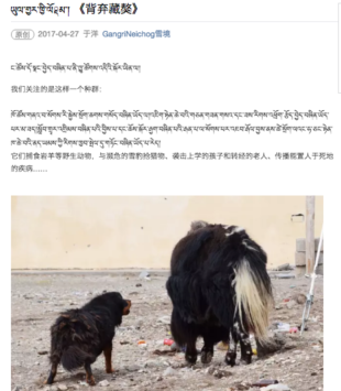 """Abandoned Tibetan Mastiffs"" By the Gangri Neichog Research and Conservation Centre"